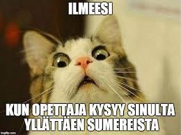 Make Your Own Cat Meme - scared cat meme generator imgflip kouluhommia pinterest cat