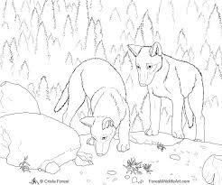forest wildlife art wolf pups coloring book page