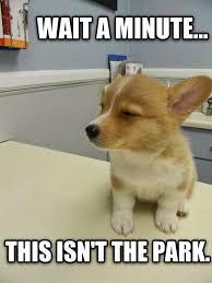 Memes Jokes - animal jokes memes