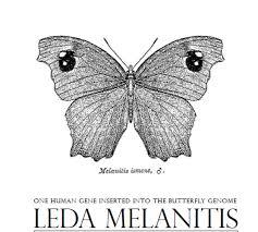 a humanised butterfly named leda melanitis interalia magazine