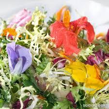 Edible Flowers Edible Flower Mix Seedgeeks Heirloom Seeds