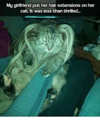 Hair Extension Meme - 25 best memes about hair extension hair extension memes