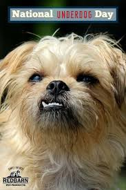 243 best redbarn pet products u0027 blog images on pinterest pet