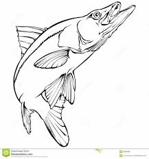 snook fish coloring page kids drawing and coloring pages marisa