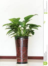 indoor ornamental plants stock images image 23220334