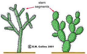 Vegetative Propagation By Roots - vegetative terminology part 2