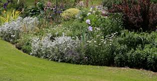 the ornamental garden in march piedmont master gardeners