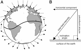 Isoline Map Definition Geomagnetic Imprinting And Natal Homing Of Sea Turtles And Salmon