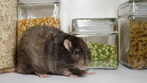 will vinegar keep rats away reference com