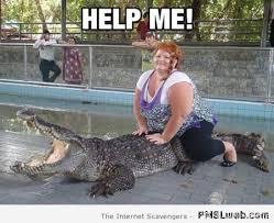 Crocodile Meme - 2 funny crocodile meme pmslweb