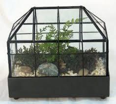 terrariums air plants tillansdsia
