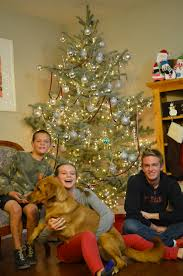 christmas tree 2014 amy roskelley