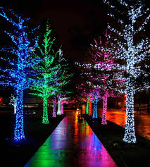 tree lights ne wall