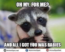 Racoon Meme - raccoon memes
