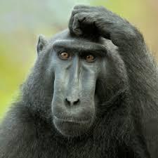 Baboon Meme - create meme monkey monkey meme monkey monkey pictures