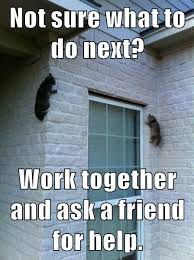 Teamwork Memes - growth mindset memes english work together and ask a friend for
