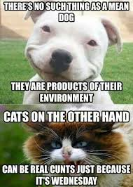 Dog Cat Meme - best 50 funny cat vs dog memes images to prove who s boss