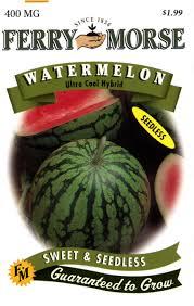 amazon com ferry morse watermelon ultra cool hybrid seeds