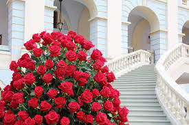 big bouquet of roses big beautiful bouquet of roses near staircase stock image