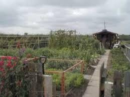 fruit u0026 vegetable growing guide for july allotment u0026 gardens