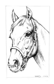gallery horse head sketches drawing art gallery
