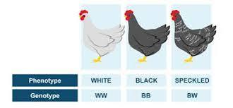 basic genetic vocabulary my site