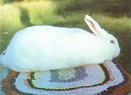 ten commandments raising healthy rabbits sustainable farming