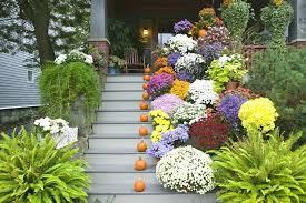 no sun plants best plants for front porch openpoll me