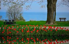 canada flowers flowers tulips landscape reflection lake ontario canada