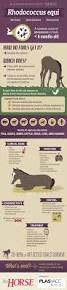best 25 summary of animal farm ideas on pinterest animal farm