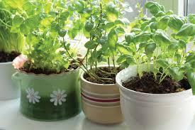 Herb Container Gardening Ideas Pot Small Herb Garden Ideas 737 Hostelgarden Net
