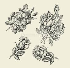 flowers hand drawn sketch flower rose dogrose rosehip floral
