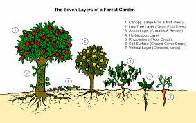Fruit Tree Garden Layout Design Tip The 7 Layers Of A Forest Garden Forest Garden