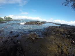 best hilo location richardsons beach park swimming snorkeling