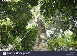 amazon rainforest native plants brazil amazon rainforest amazonia jungle forest tropics tropical