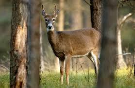 100 miller christmas tree farm ct hungry deer force