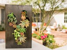 how to create a living wall in your home hgtv