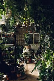 Indoor Garden by 1111 Best Green Room Images On Pinterest Plants Indoor Plants