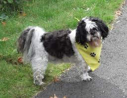 Pictures Of Blind Dogs Image Gallery Blind Dog Support For Owners Of Blind Dogs