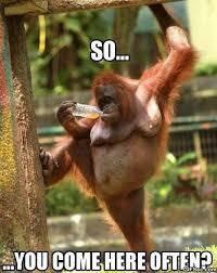 Ape Meme - funny provocative ape viral viral videos
