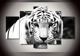 beautiful white tiger blue canvas into the wildlife
