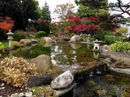 japanese water garden with koi fish and ornament splendid
