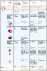 types of red colors this table shows the different types of cells present in blood