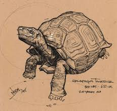 25 best sketches animals images on pinterest animal drawings