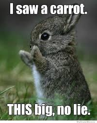 No Lie Meme - i saw a carrot this big no lie weknowmemes