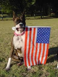 rescue a boxer dog boxer rescue and adoption inc home