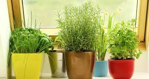 Herb Window Box Indoor 14 Cancer Fighting Plants For Your Indoor Herb Garden