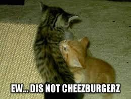 Cheezburger Meme Creator - lol cats i can has cheezburger mental floss