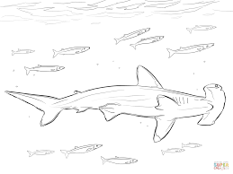 hammerhead shark with pilot fishes coloring page free printable