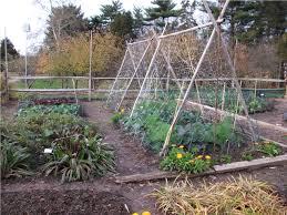 free vegetable garden layout vegetable garden free stock photo public domain pictures